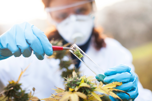 Recreational and medical cannabis deemed essential to cope with 'stay-at-home' orders.